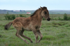 There's Gotta be a Pony Around Here Somewhere!!